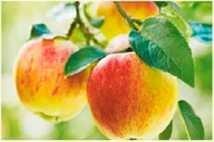 яблоки при гастрите - питание при гастрите, гастрит