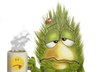 Учимся правильно лечить насморк - простуда, насморк, заболевания органов дыхания