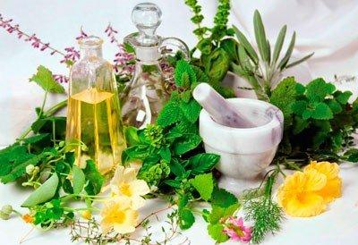 Трава мокрица — лечебные свойства