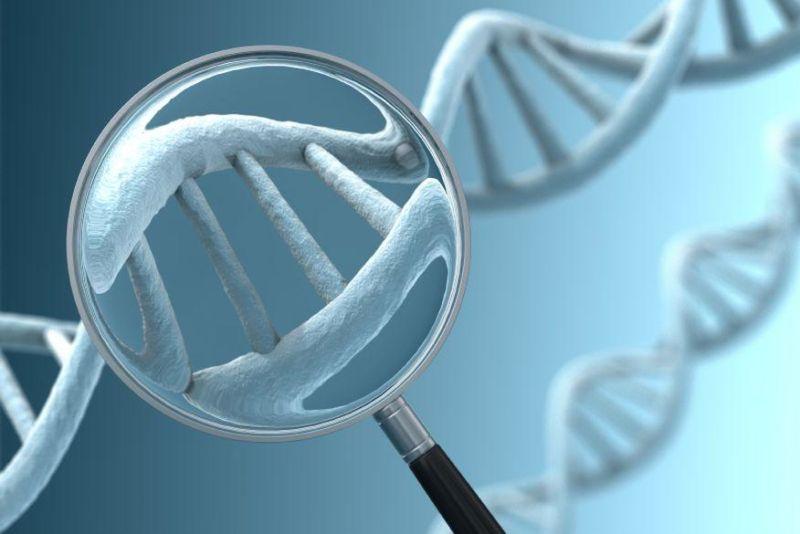 Как генетика влияет на продолжительность жизни?