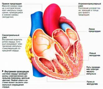 Нарушения сердечного ритма – причины, симптомы и лечение - сердцебиение, сердце, аритмия