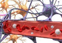 Биотехнологии: Органы и ткани человека на компьютерном чипе. - медновости